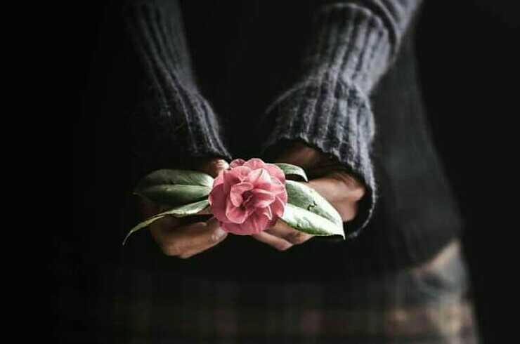 وردة عشق