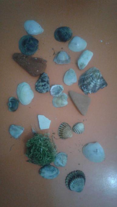 الأصداف التي جلبتها اليوم من الشاطئ