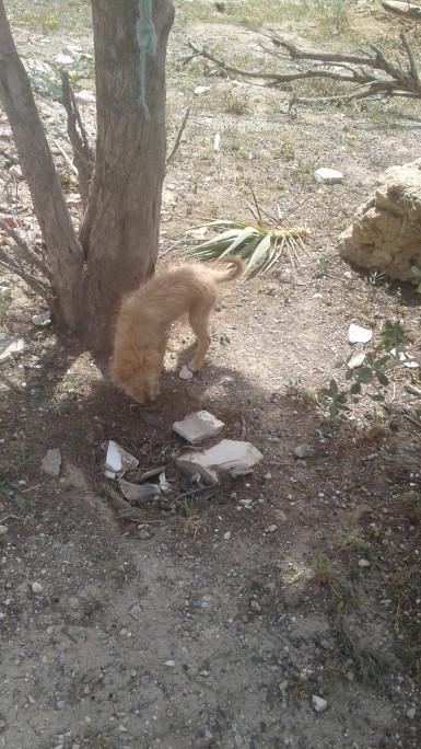وجدت كلبا صغيرا أمام المنزل