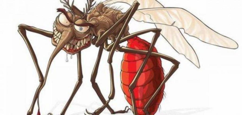 البارحة هجوم من الناموس و الحشرات