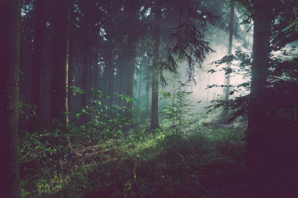 الغابة و التحضير للفريلانس