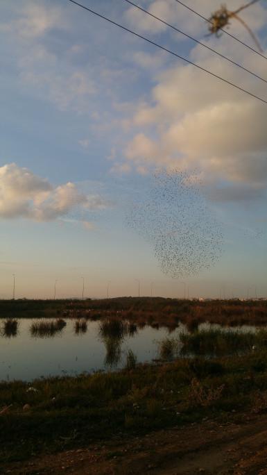 إستعراض الطيور المهاجرة