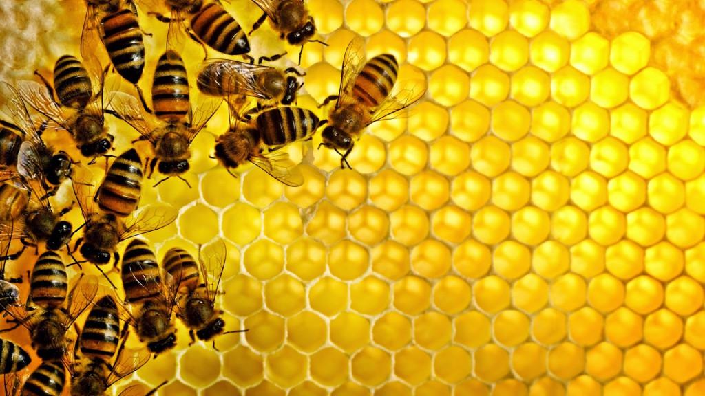 هل يغضب النحل لو أنتج الذباب عسل ؟